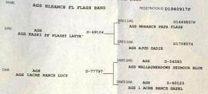 AGS Pedigree for HLRanch FL Flash Bang